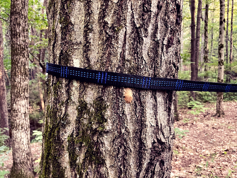 Daisy loop strap wrapped around a tree.