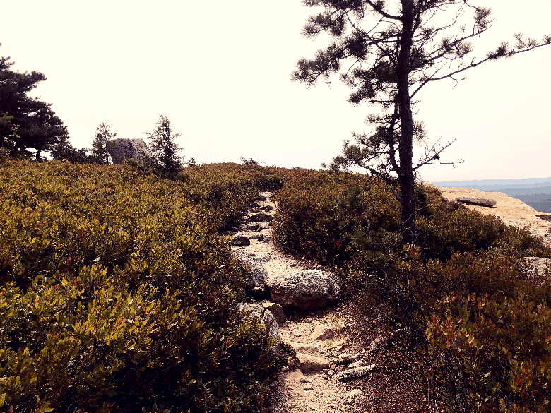 Well-carved trail on a mountain top through shrubs.
