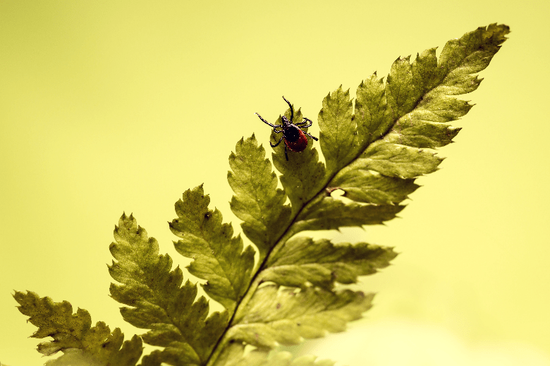 SIngle tick sitting on the leaves of a plant.