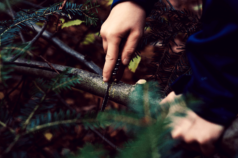Hand sawing through a small-sized branch of a tree.