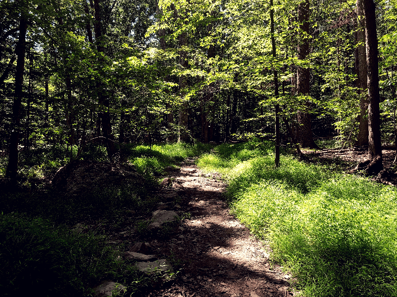 An empty trail surrounded by lush grass, trees, shrubs and shadows.
