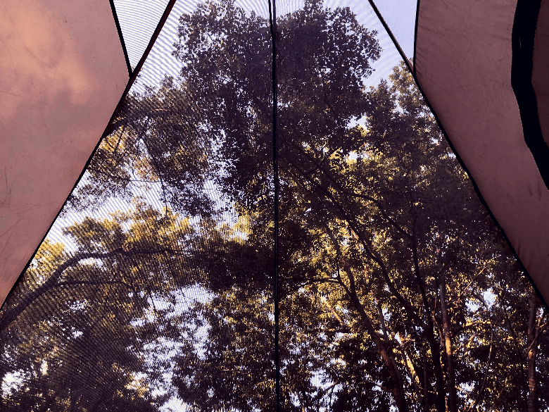 Trees as seen from the floor of a tent looking up through the mesh.